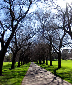 trees-in-park