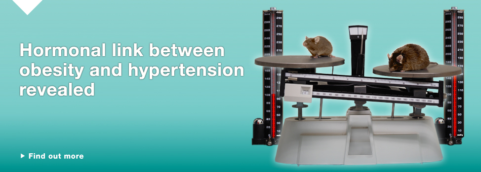obesity and hypertension Find out more, http://www.med.monash.edu.au/news/2014/cause-of-hypertension-in-obesity.html