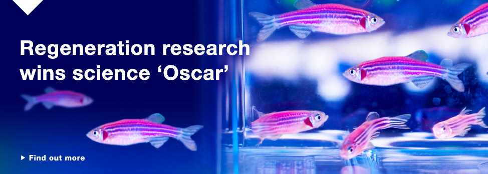MRegeneration research wins science oscar  http://www.med.monash.edu.au/news/2015/eureka-win-armi-currie.html