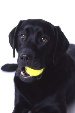 Photo of Guido the black dog