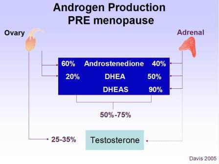 testosterone in females